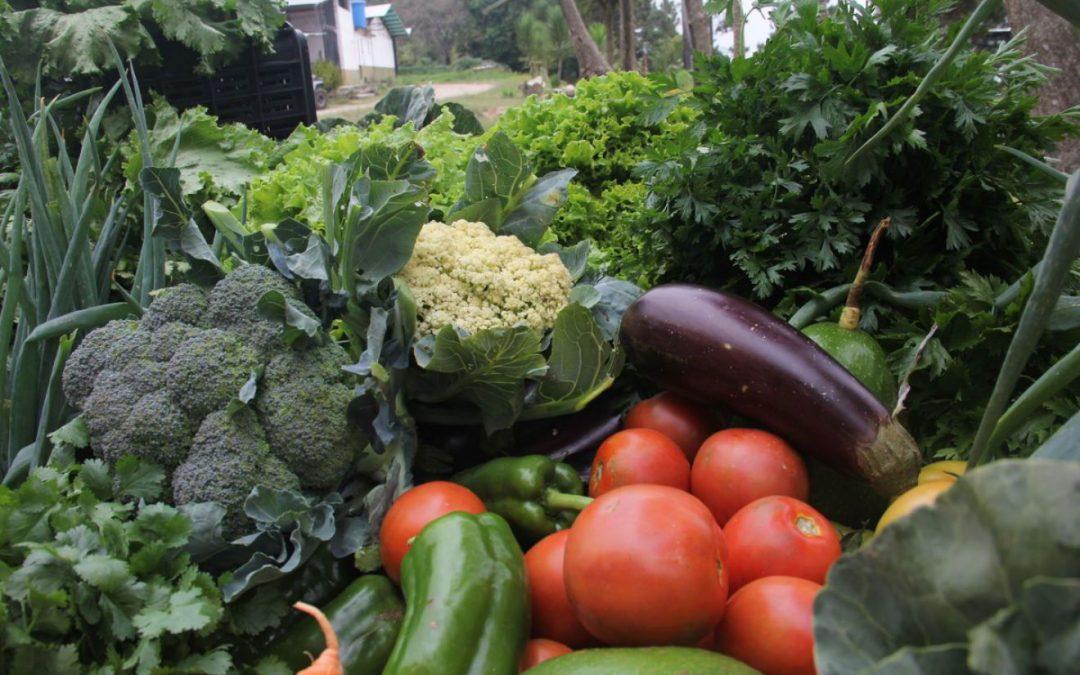 66 toneladas de alimentos fueron distribuidos en Miranda a través de Mercados Comunitarios