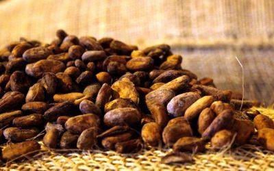 El cacao mirandino conquista paladares del mundo