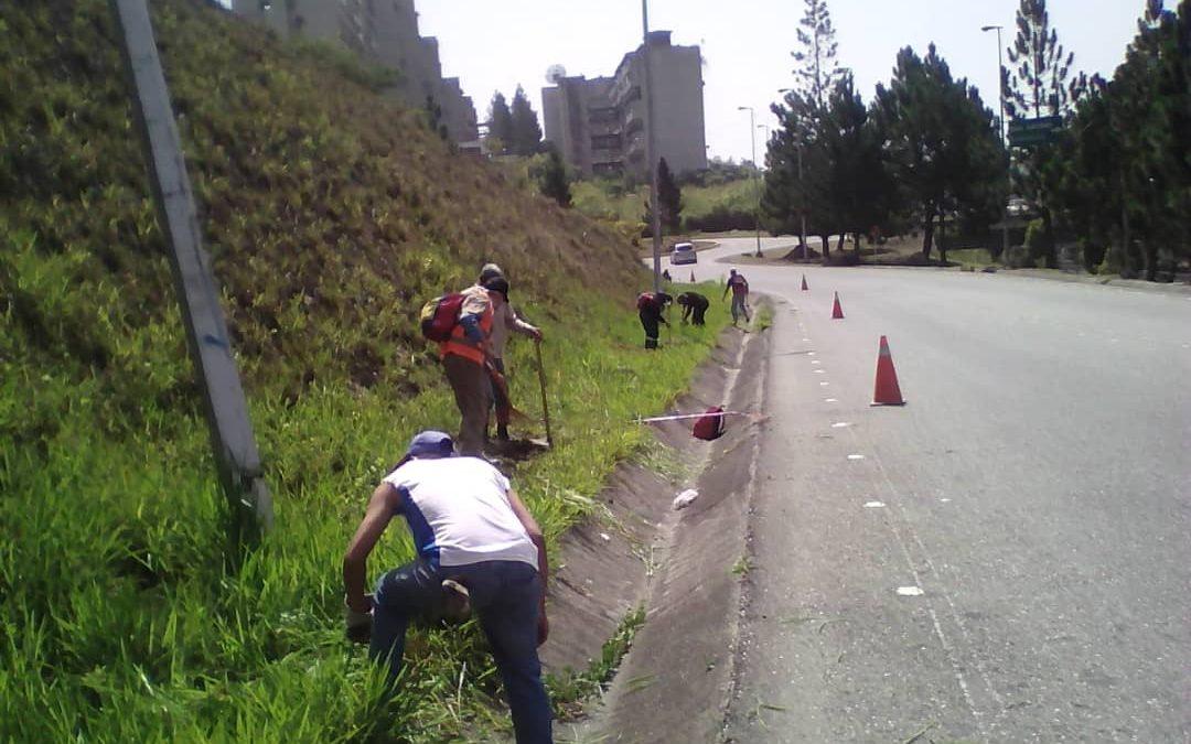 Mantienen labores de limpieza y mantenimiento en la Panamericana